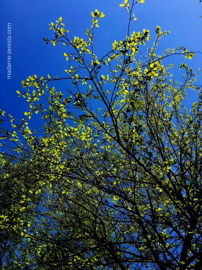 Spring. First leaves of a tree. Blue Sky. Photography.