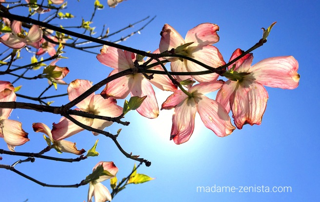 Pink flowers, blue sky, sun, spring, summer.