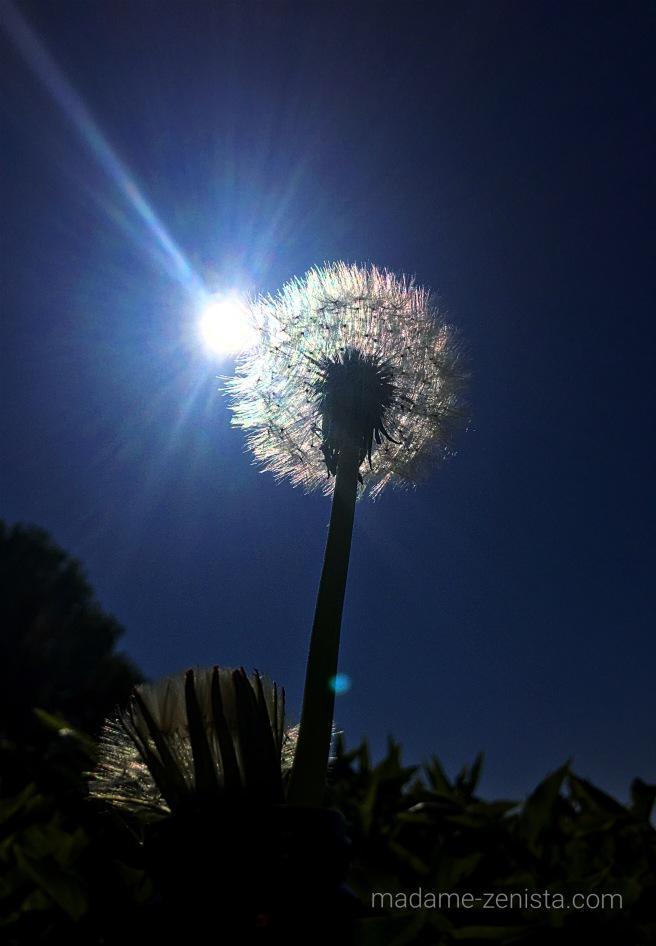 Dandelion, sun, sky, nature